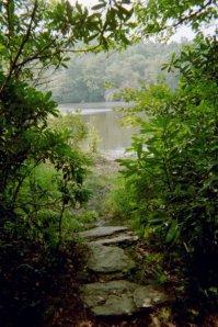 path  opening up to lake