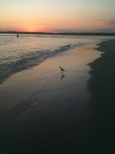 bird alone at sunset