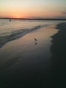 bird alone at sunset