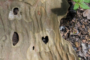 Heart bark w plant