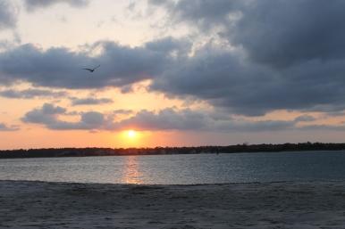 sunset w bird soft