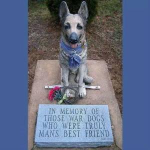Animal War Dogs