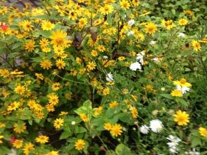 Arboretum yellow flowers