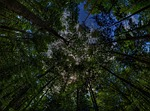 treetop-391341_150