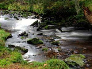 Creek Currents