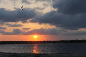 Sunset w bird