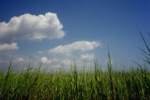 Marsh grass and  clouds