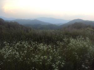 mountains and lttle flowers