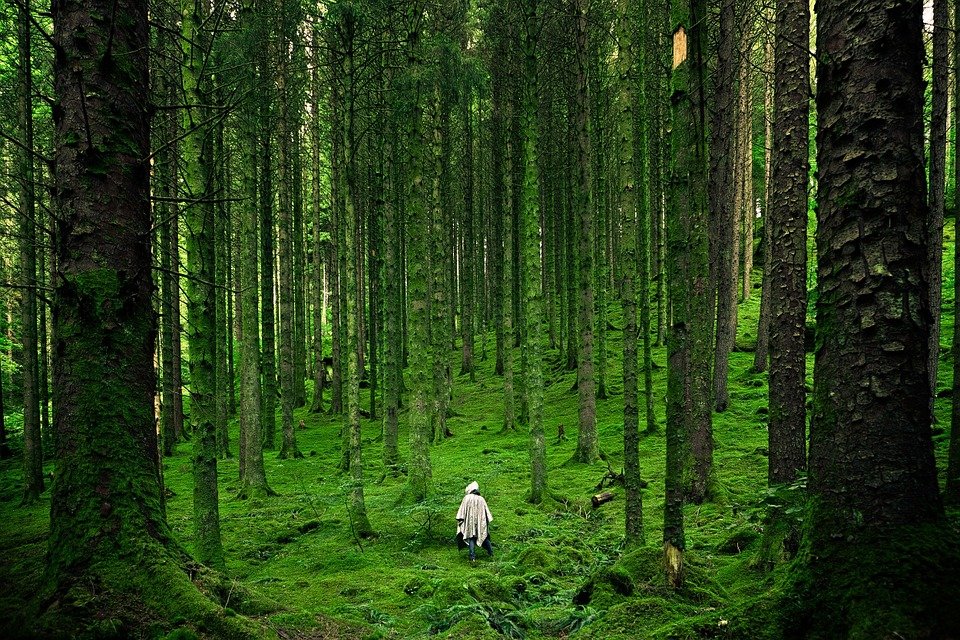 mossy forest from pixabay