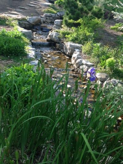 garden creek close up