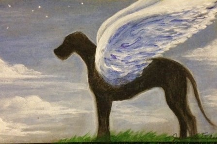 carolines-angel-dog