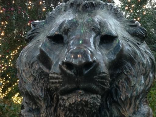 lion-close-up