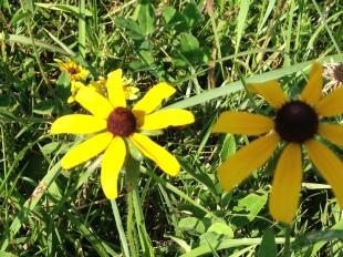 flowers-close-up