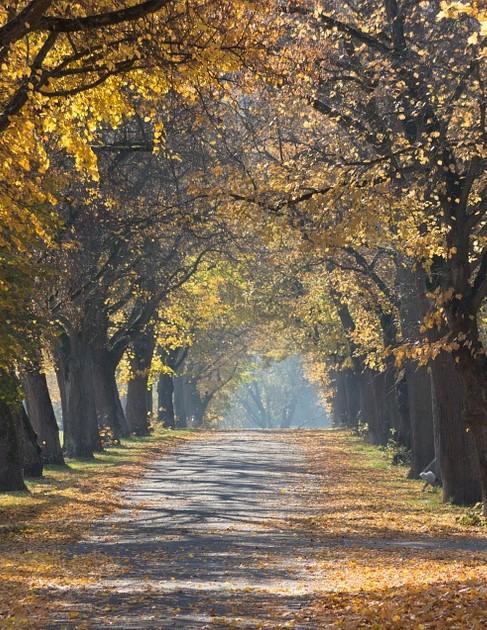 sun-path-through-trees-pixabay
