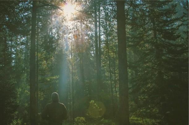 forest-605505_960_720.jpg pixabay (2)