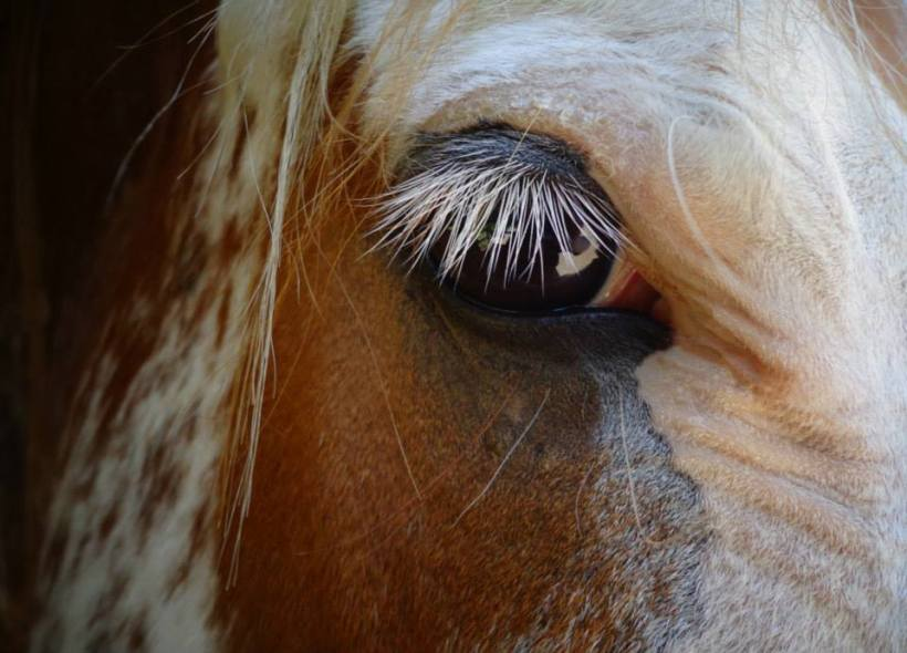 horse close up by Ayla