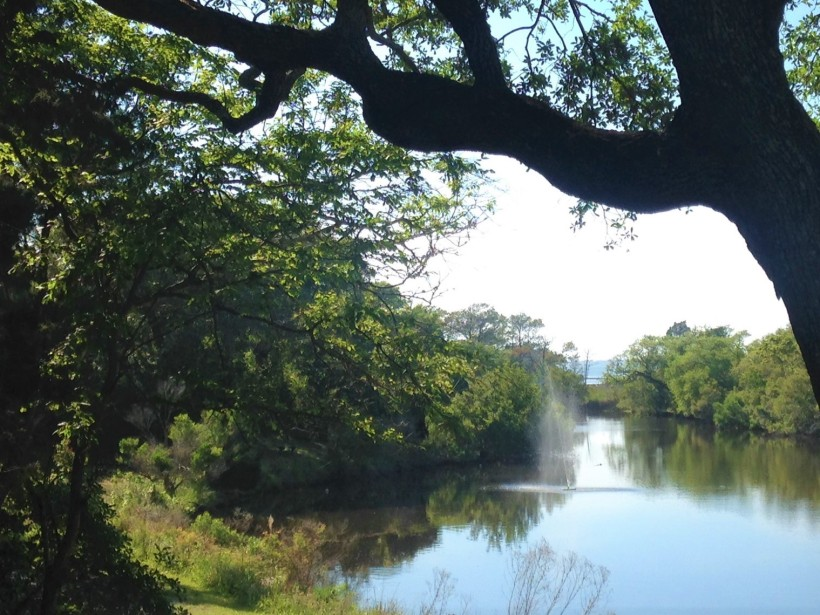 pond throug trees (3)