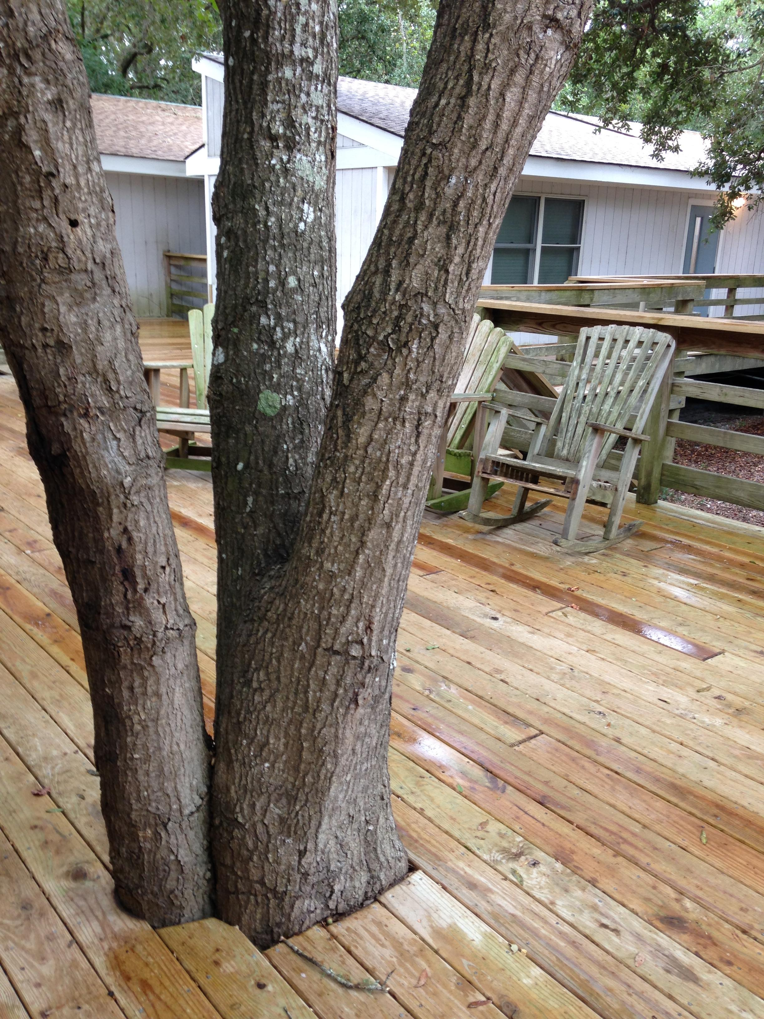 Tree in deck