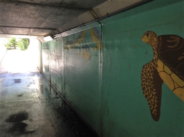 tunnel with turtle