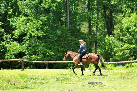 JoAnne on Horse trotting (3)