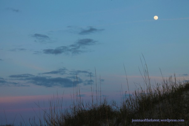 Awesome moon w dunes (2)