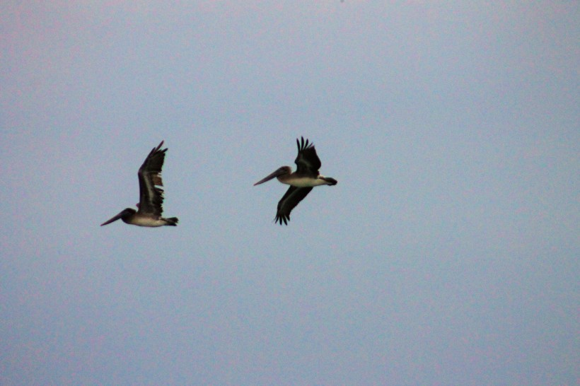 flying pair