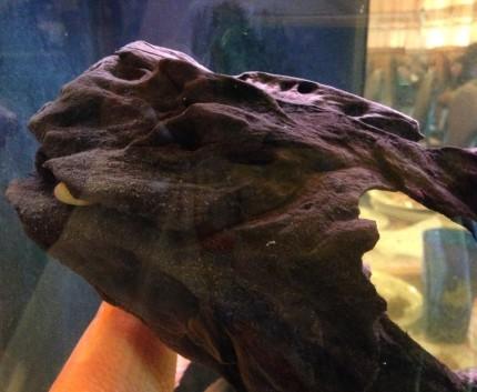 turtle perch
