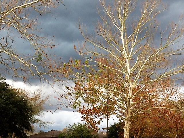 autumn front (2)