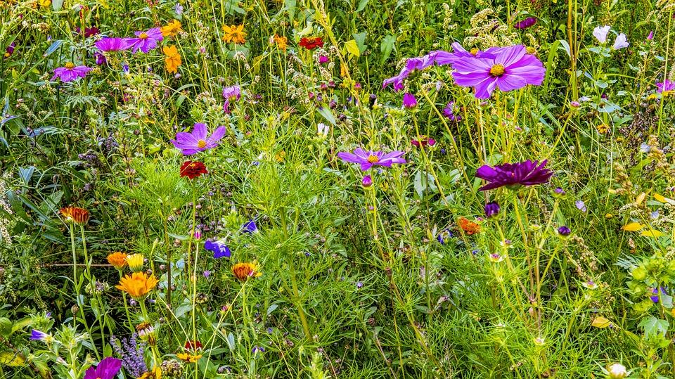 flower-meadow pixabay wild flowers