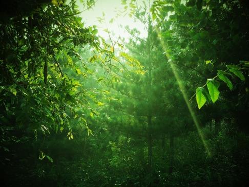green-1719373_960_720.jpg pixabay