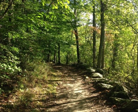path-in-pequot-woods-e1507340134710.jpg