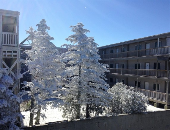 snowy trees at Beech Mtn condo.jpg