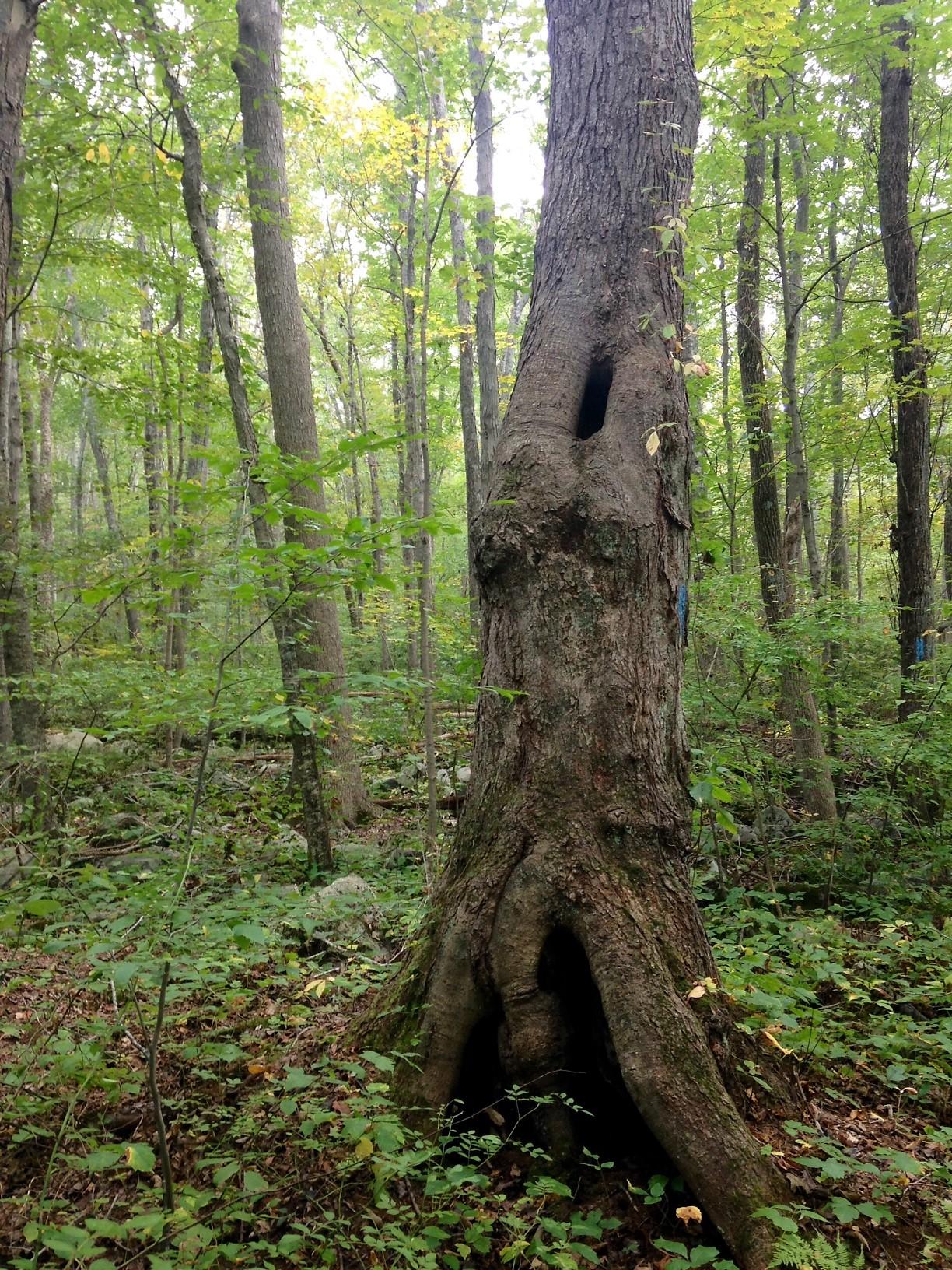 tree woman lighter