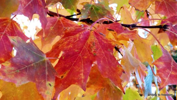 gratitude, blessings, autumn