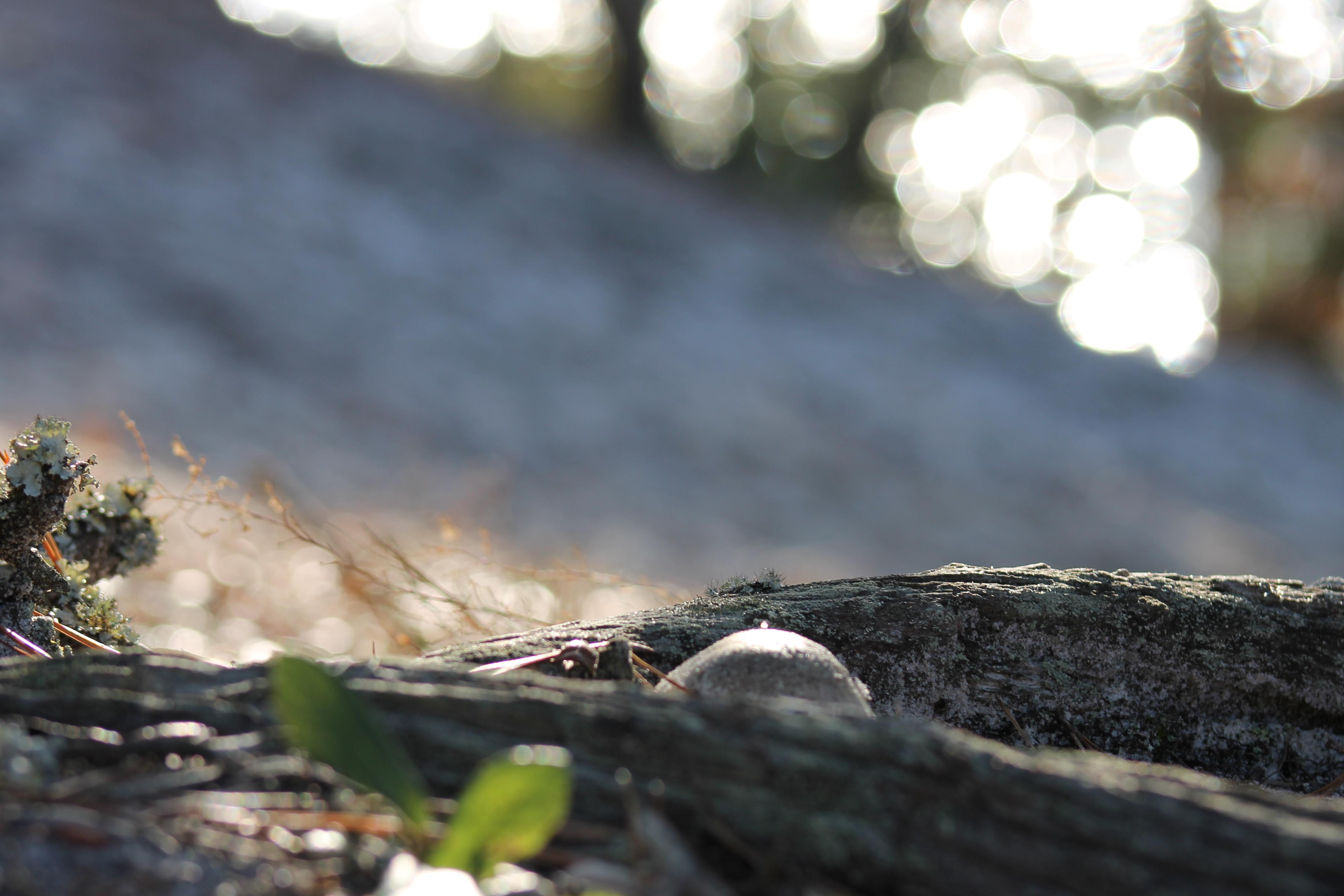mushroom peekaboo.JPG