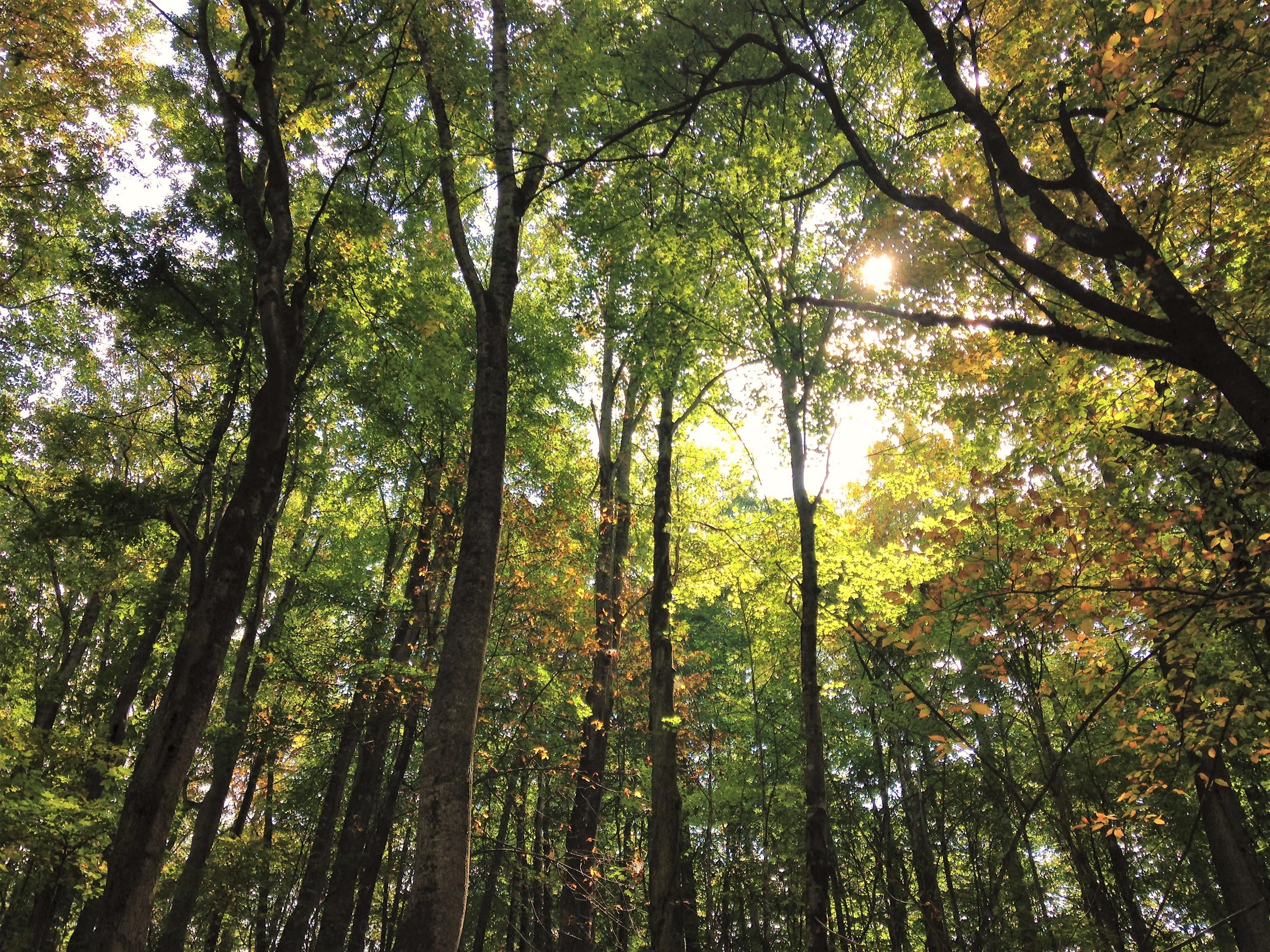 beautiful trees (2)