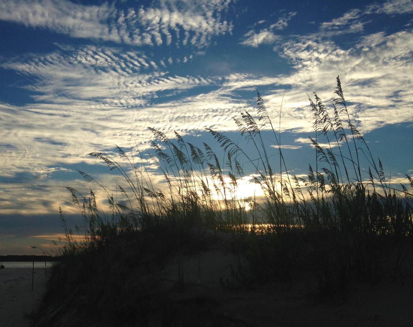 sea oats on sand dune at dusk