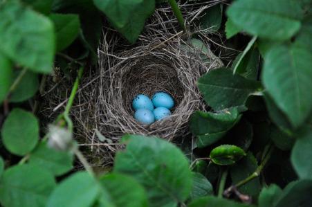 bird nest from pixabay