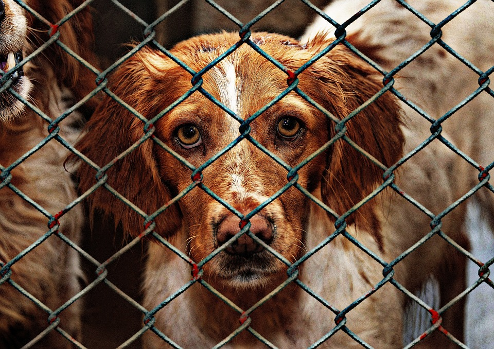 Dog behind fence from pixabay