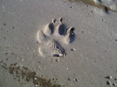 Paw print from pixabay