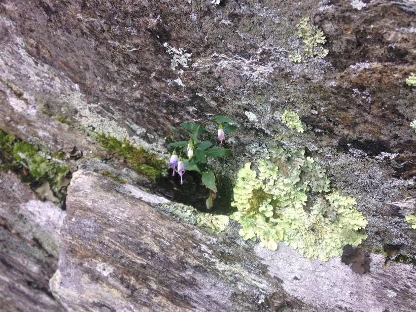flowers growing in rock pocket