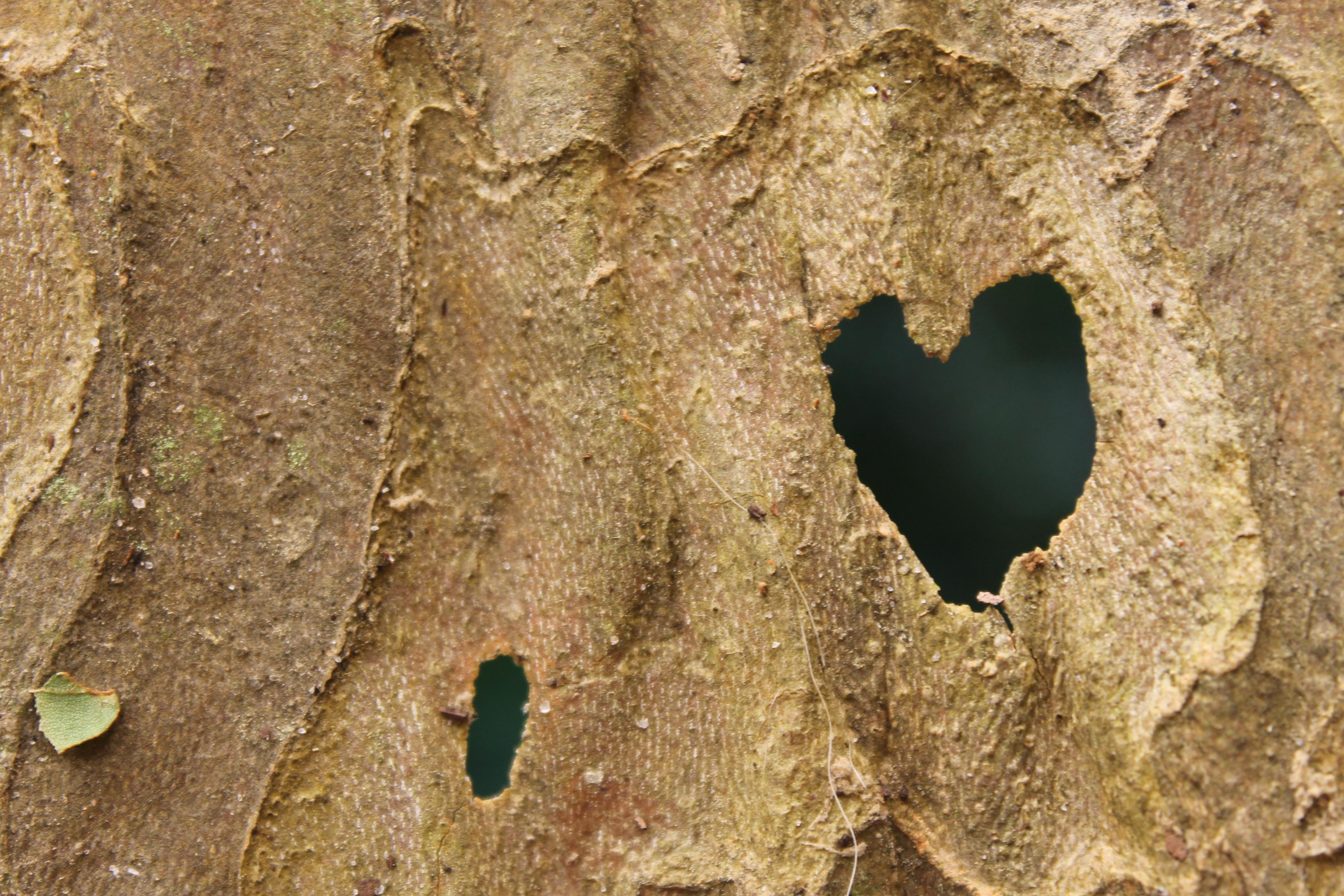 Heart in Bark on green