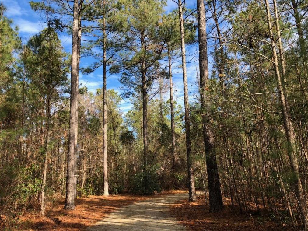 trail through trees w blue sky
