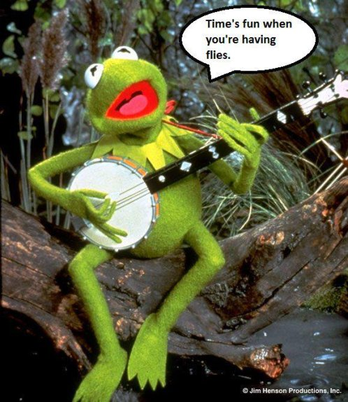 kermit times fun when you're having flies