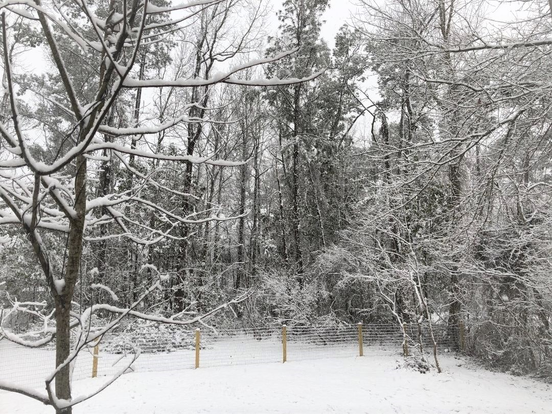snow in March (2)