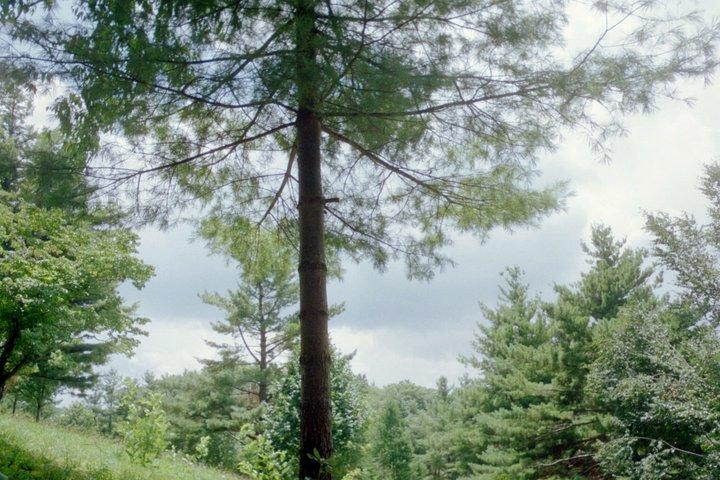 Tree on Boone Hillside
