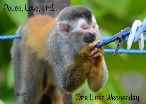 one-liner-wednesday-badge-2018-19