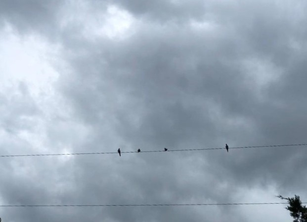 birds on a wire at 312