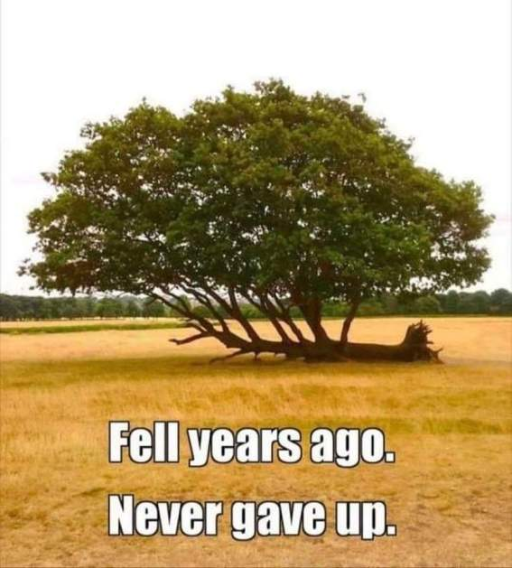 tree fell but didnt give up