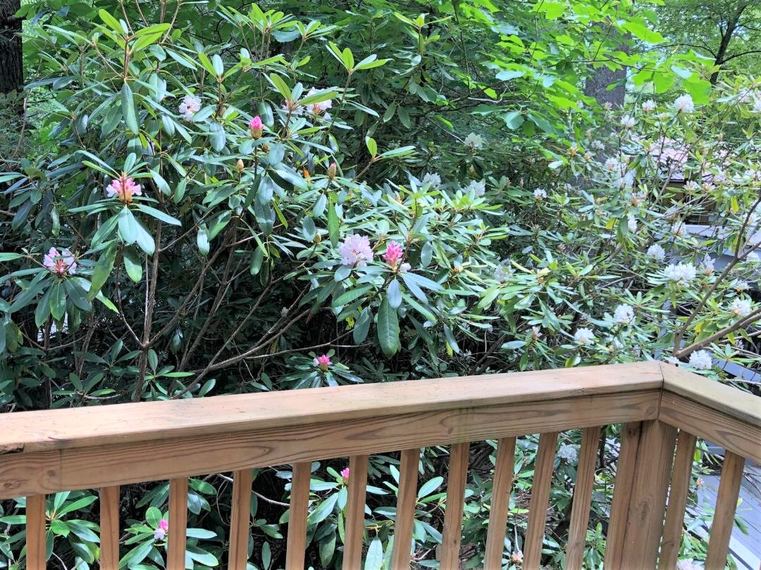 balcony rhododendron